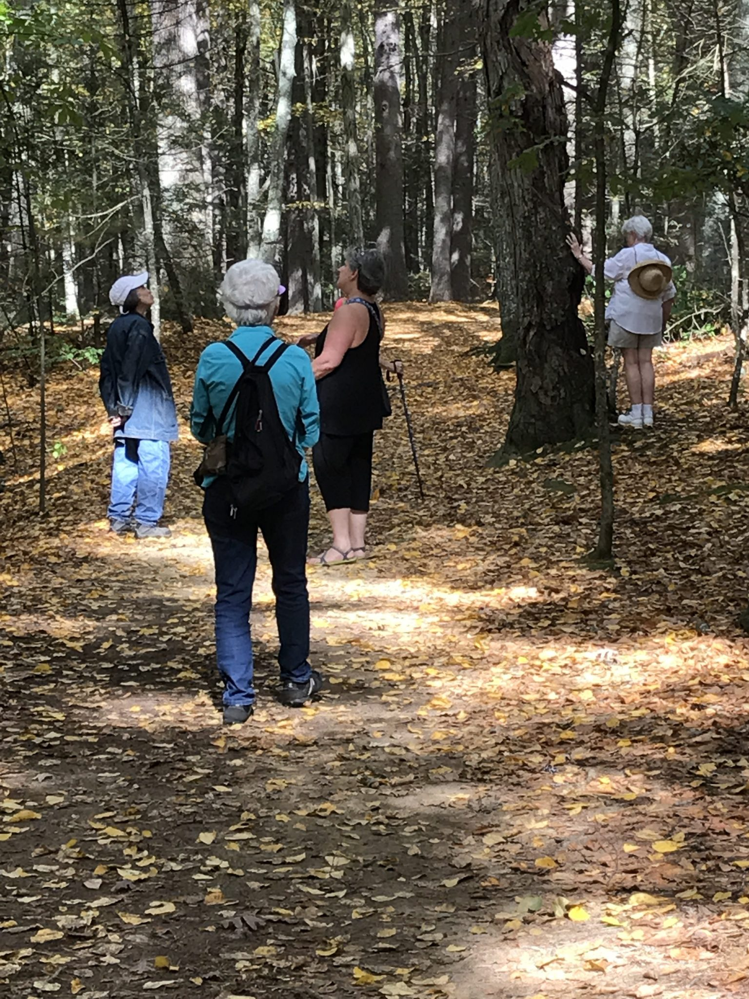 Adams Woods Mindfulness Walk with John Calabria