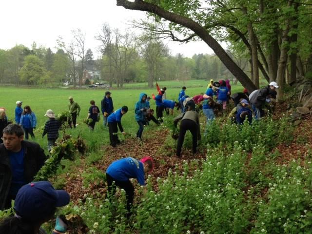 Stewardship Work Days: Garlic Mustard Pulls at Locations in Lincoln