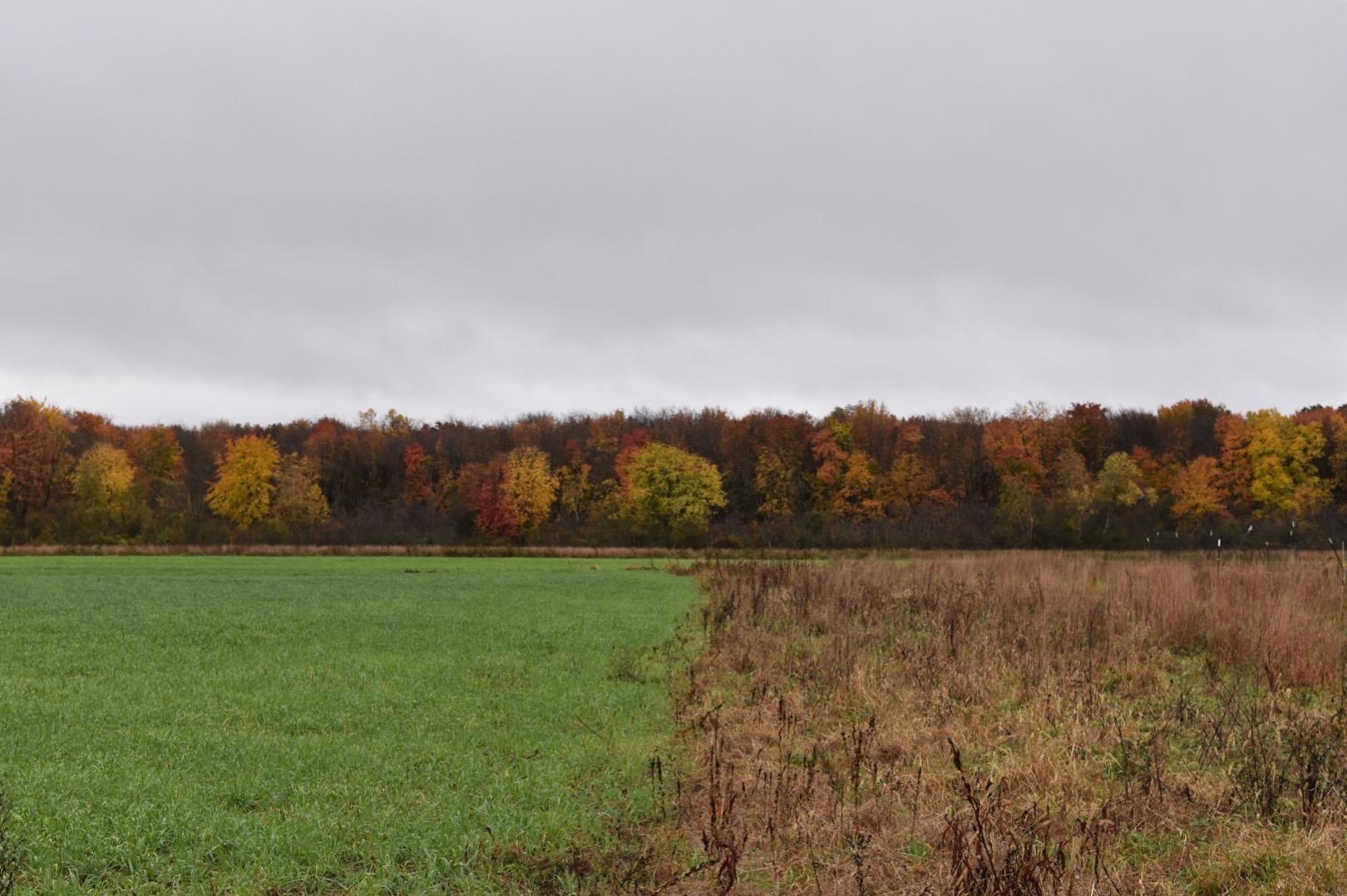 Fall Birding at Ricci Farm