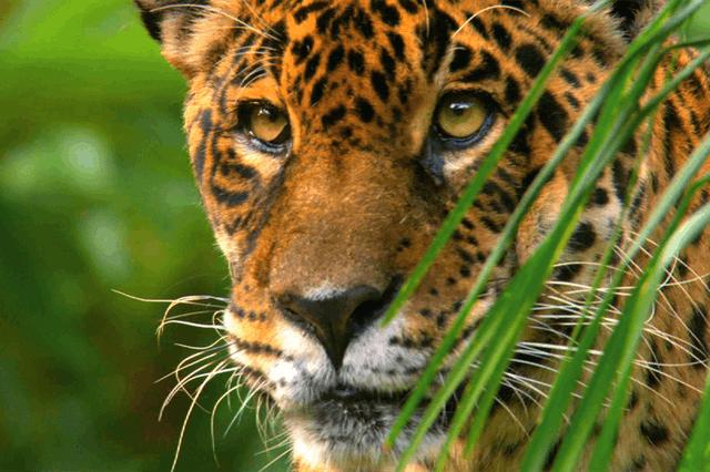 """LLCT Movie Night Series presents """"Wild Amazon: Cradle of Life"""""""