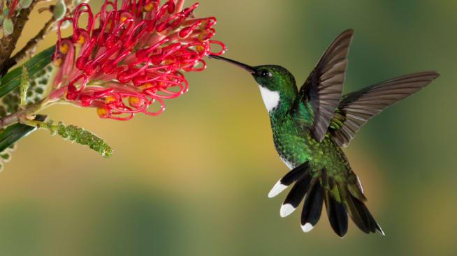 "LLCT Movie Night Series presents ""Hummingbirds: Jewelled Messengers"""