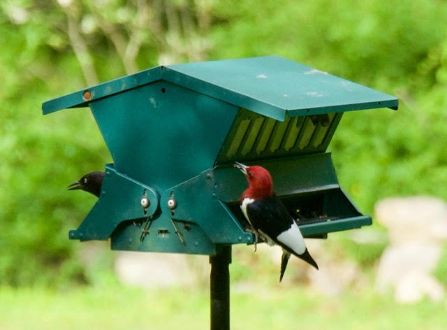 Bird Feeding 101: Feeding and Caring for Birds in an Era of Climate Change