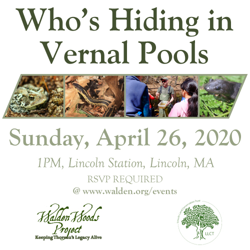 2020 Vernal Pool Walk