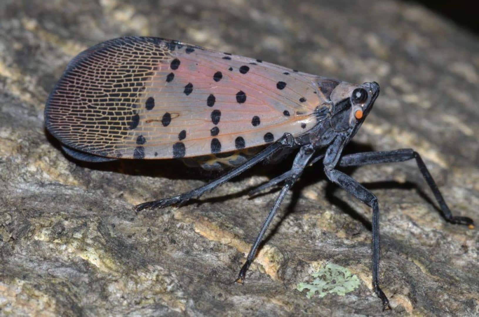 Invasive Insect and Plant Species in Massachusetts
