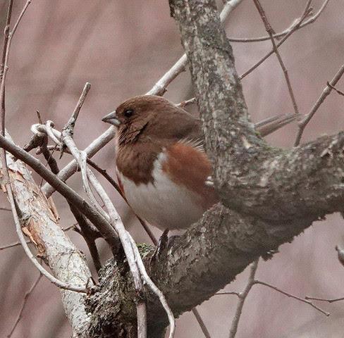 May 2nd Spring Birding Walk